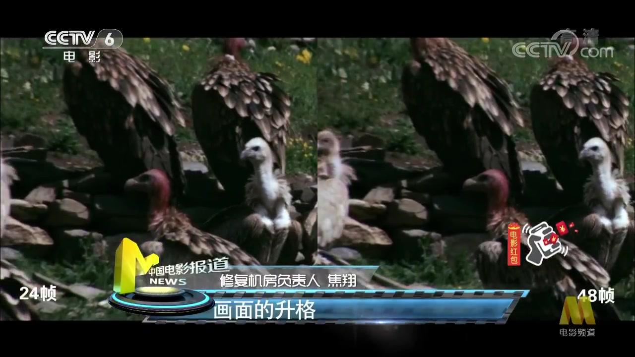 《黄土地》《盗马贼》修复展映 揭秘国内4K影片修复现状